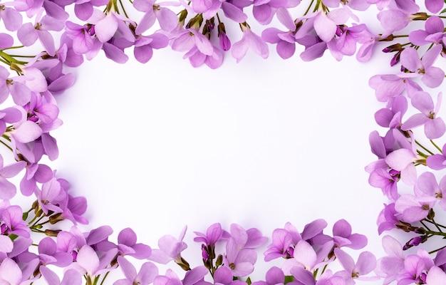 Fiori rosa primaverili luminosi e delicati sotto forma di cornice su sfondo bianco