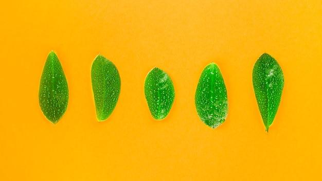 Foglie verdi succose luminose con gocce d'acqua
