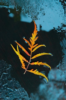 Foglia di autunno arancione brillante in acqua su un nero.