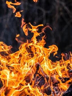 Fuoco arancione brillante dalla combustione del legno di betulla.