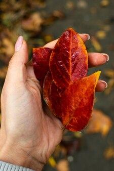 Foglie di arancio brillante in mano, autunno