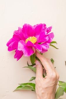 Peonia rosa brillante e mano femminile su un tavolo pastello chiaro
