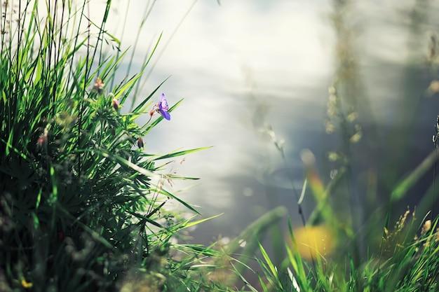 Verdi primaverili luminosi all'alba nella foresta. la natura prende vita all'inizio della primavera.