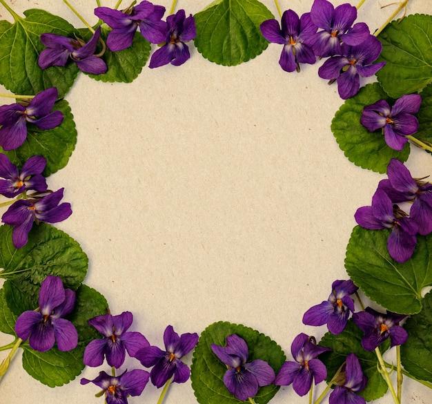 Viole viola primaverili luminose sotto forma di cornice su uno sfondo di carta