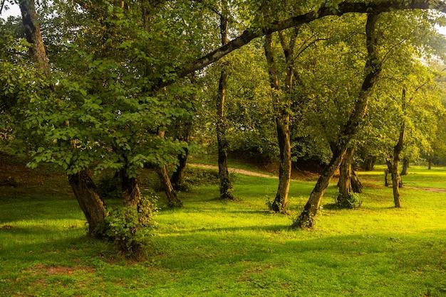 Alba luminosa sulla radura nella foresta