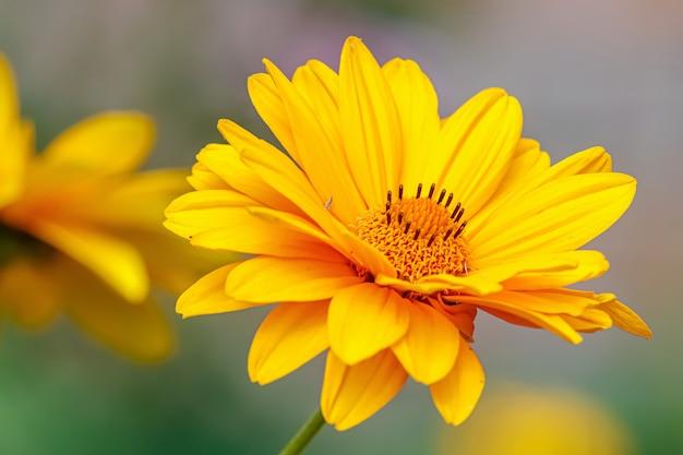 Primo piano giallo brillante del fiore al sole al giorno di estate