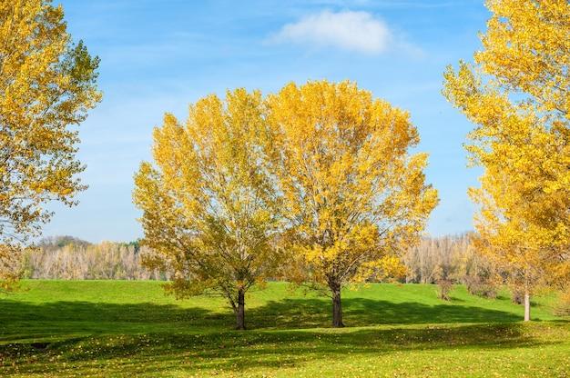 Alberi gialli luminosi nella foresta di autunno