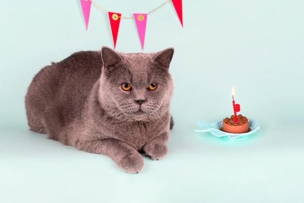 Il gatto grigio britannico spegne la candela sul dolce su fondo leggero. festa di gatto di compleanno