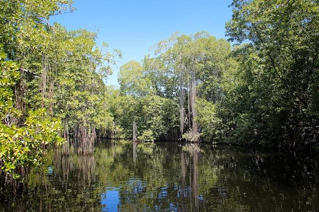 Ampio fiume vicino al fiume black in giamaica, paesaggio esotico nelle mangrovie Foto Premium
