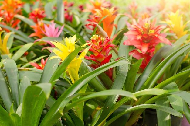 Bromeliad che fiorisce nel giardino