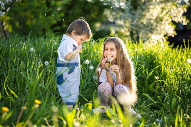 Fratello e sorella si divertono a giocare con i denti di leone in fiore bianco giallo e soffice in un caldo giardino primaverile