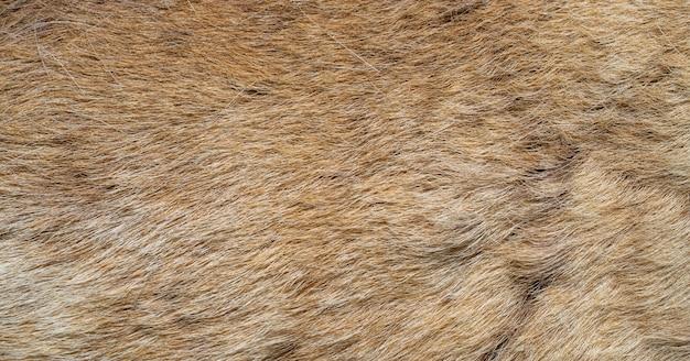 Pelliccia animale marrone. sfondo naturale. superficie calda e soffice.