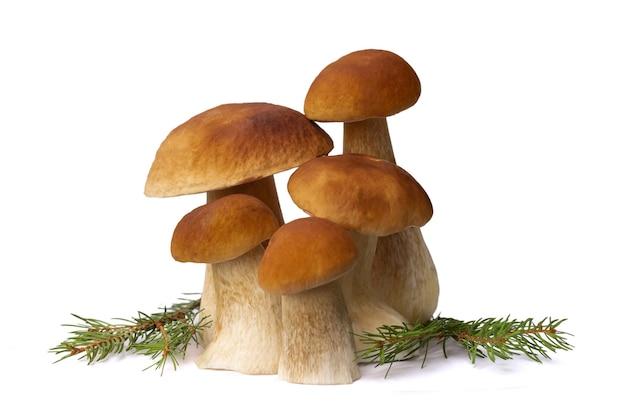 Funghi porcini marroni isolati su priorità bassa bianca.