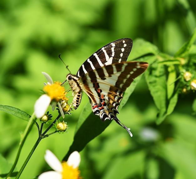 Farfalla marrone sul fiore in giardino