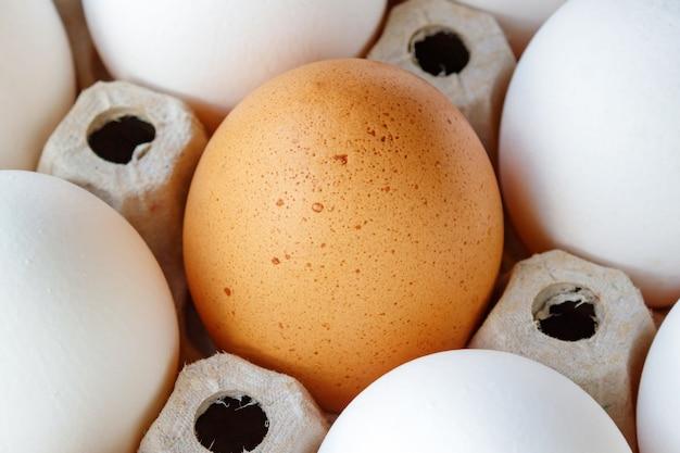 Uovo di gallina marrone tra le uova bianche nel primo piano del vassoio di cartone