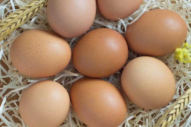 Fai rosolare le uova di gallina nella paglia. orzo di ramoscelli