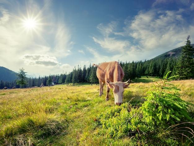 Mucca marrone sul pascolo di montagna
