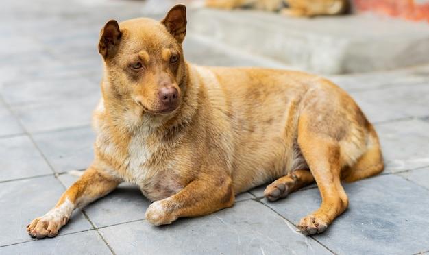 Cane marrone seduto sul marciapiede che guarda tutto intorno