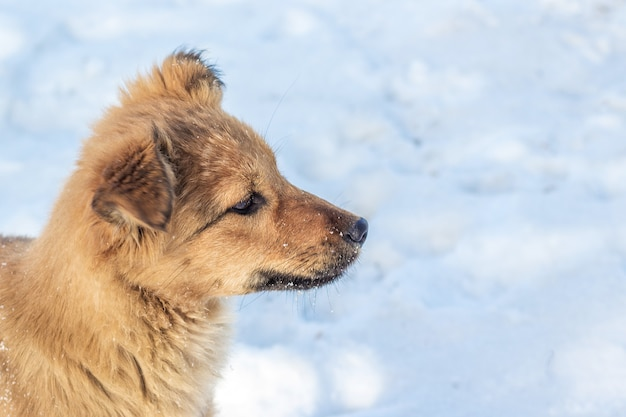 Cane marrone in inverno sulla neve.
