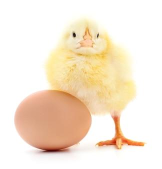 Uovo marrone e pollo isolato su sfondo bianco
