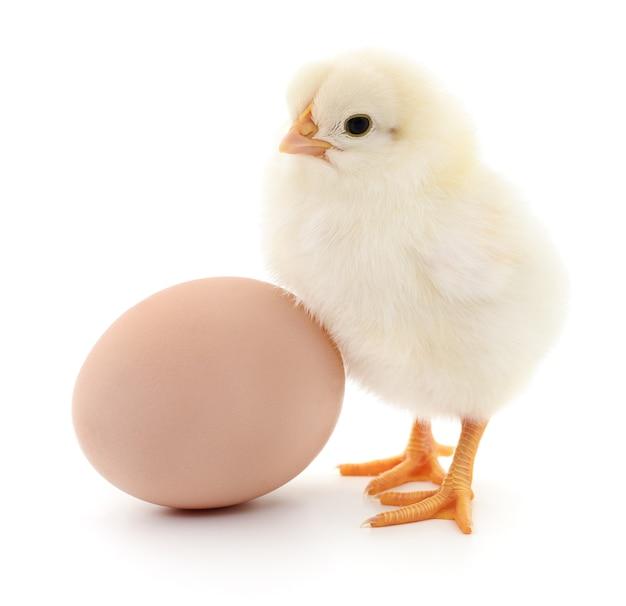 Uovo marrone e due polli isolati su sfondo bianco