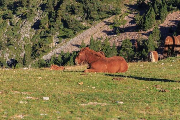 Puledro di cavallo marrone di profilo sdraiato che dorme su una montagna verde