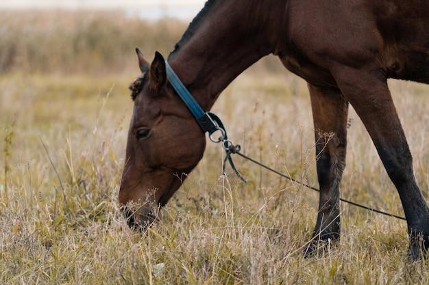 Un cavallo marrone pascola in un prato sullo sfondo di un lago. cavallo al pascolo