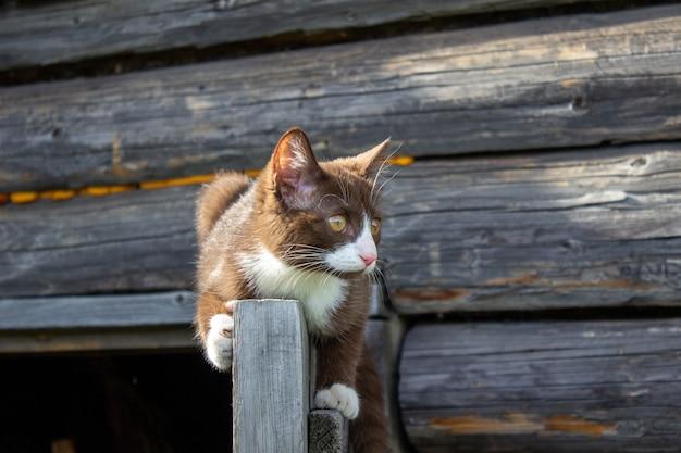 Un gattino marrone è seduto sulla porta di legno di una casa in legno sulla strada. un gattino di nome busia. il gattino sta giocando