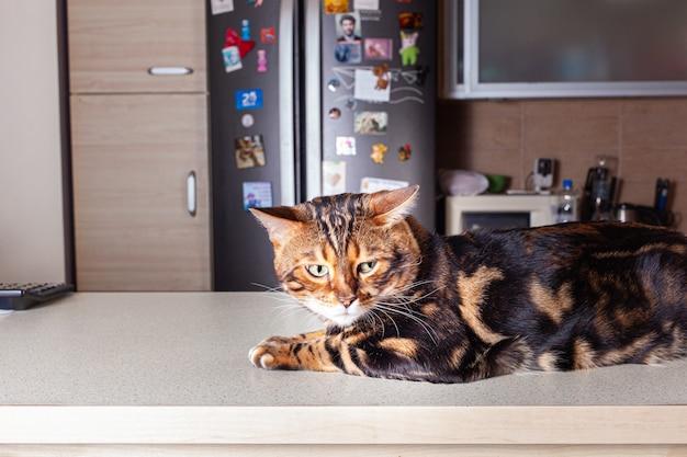 Un gatto beige leopardo marrone si trova su un tavolo beige bar