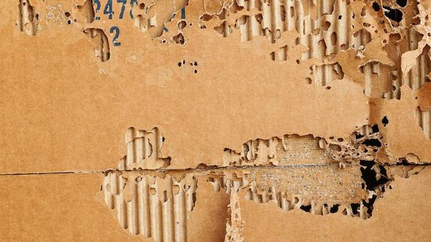 Carta marrone danneggiata dalle termiti