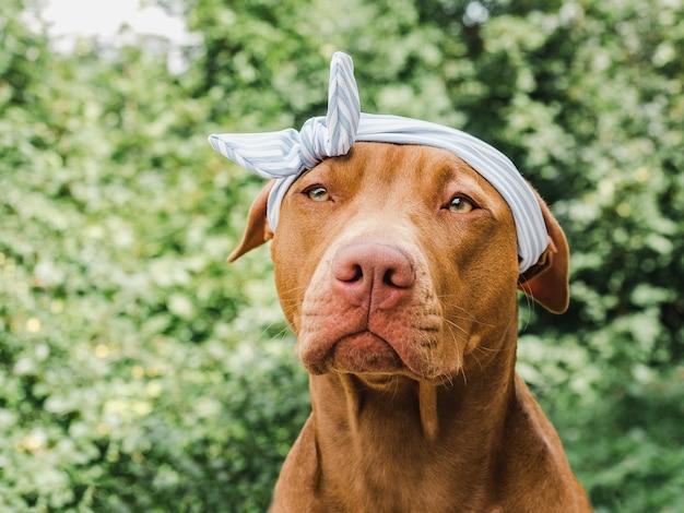 Cucciolo marrone con bandana