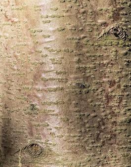 Struttura della corteccia di albero marrone e rosso
