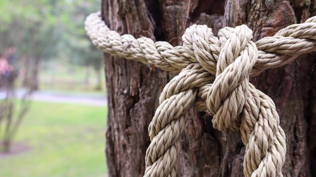 Una corda marrone annodata saldamente a un robusto tronco d'albero