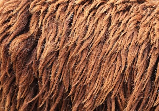 Trama di pelle di pecora marrone