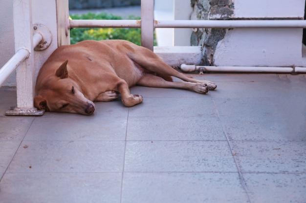 Un cane di strada randagio marrone che dorme sul pavimento all'angolo dell'edificio. campagna di donazione di animali