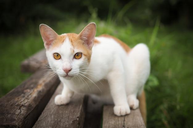 Gatto marrone e bianco su vecchio di legno con fondo vago