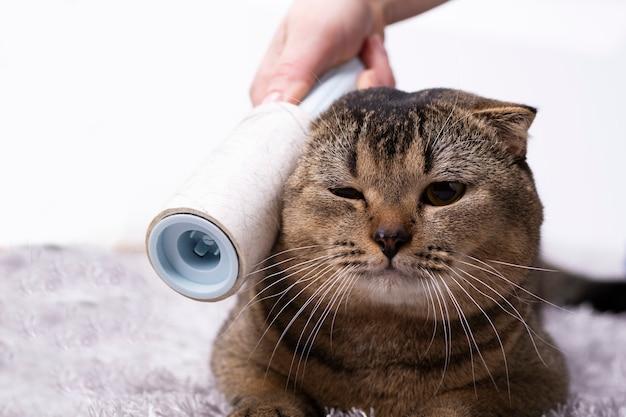 Spazzolare un gatto marrone con un pettine a casa