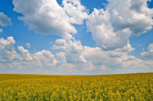Grano saraceno giorno meravigliosamente soleggiato