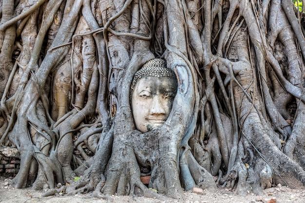 Testa di buddha incastonata in un albero di banyan, ayutthaya, tailandia