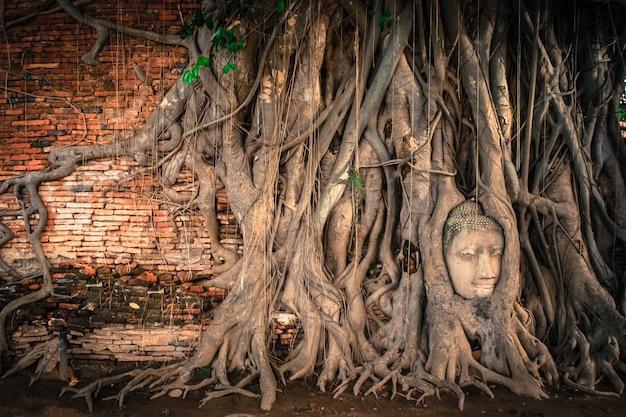 Statua della testa di buddha intrappolata nelle radici dell'albero della bodhi