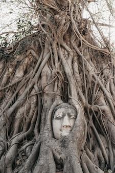 Testa di buddha nelle radici degli alberi
