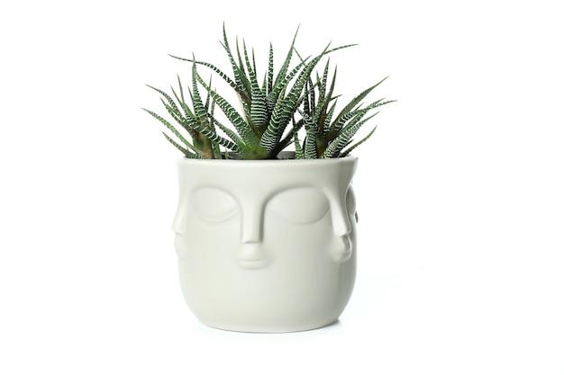 Pentola di buddha con pianta isolata su sfondo bianco