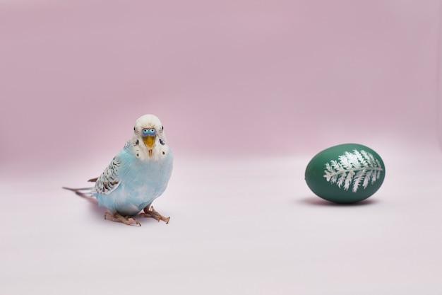 Budgerigar con l'uovo di pasqua su fondo rosa con lo spazio della copia