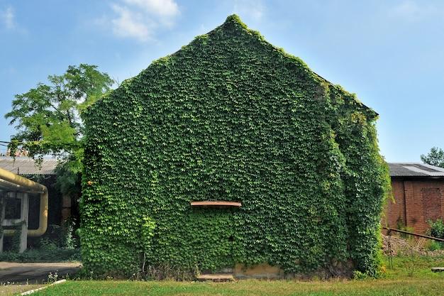 Facciata dell'edificio ricoperta di edera verde