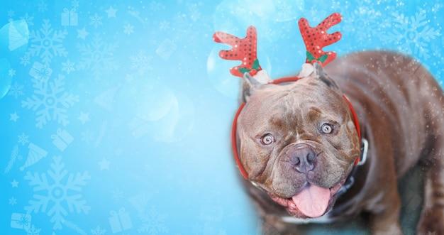 Bulldog con corna sopra la testa del concetto di natale sullo sfondo del fiocco di neve. il contatto visivo è carino