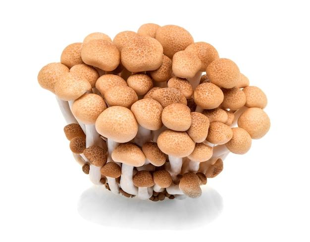 Buna shimeji funghi isolati su sfondo bianco