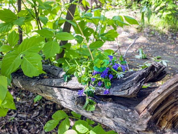 Mazzo di fiori di campo blu sul ceppo di albero nella foresta