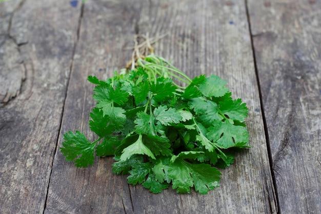 Mazzetto di foglie di coriandolo fresco sul tavolo di legno erbe di coriandolo sullo sfondo grigio con primo piano