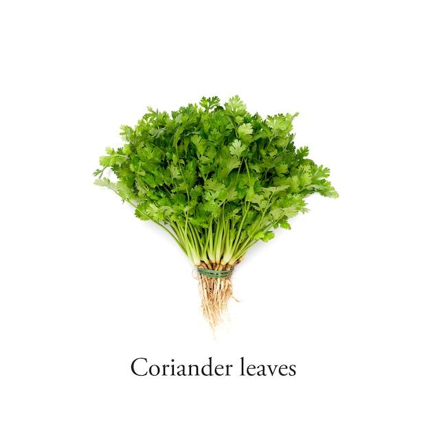 Mazzo di foglie di coriandolo fresco su sfondo bianco