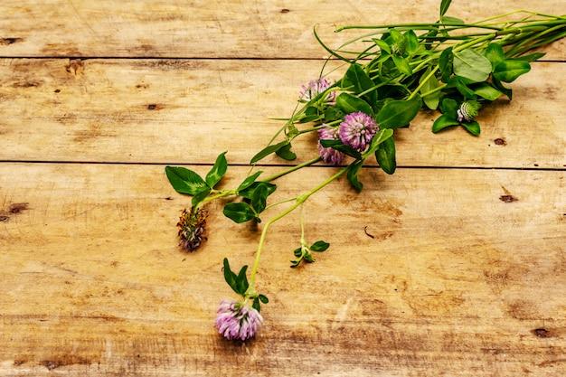 Mazzo di trifoglio di fioritura fresco